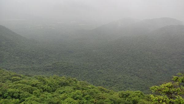dense-forest-seen-from-asawa-fort