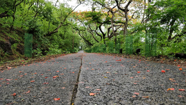 sanjay-gandhi-national-park1